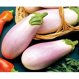 Know Your Eggplants Pt3 European And American Types