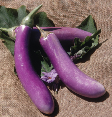 Know your eggplants Pt3 European and American types #1: Orient Charm